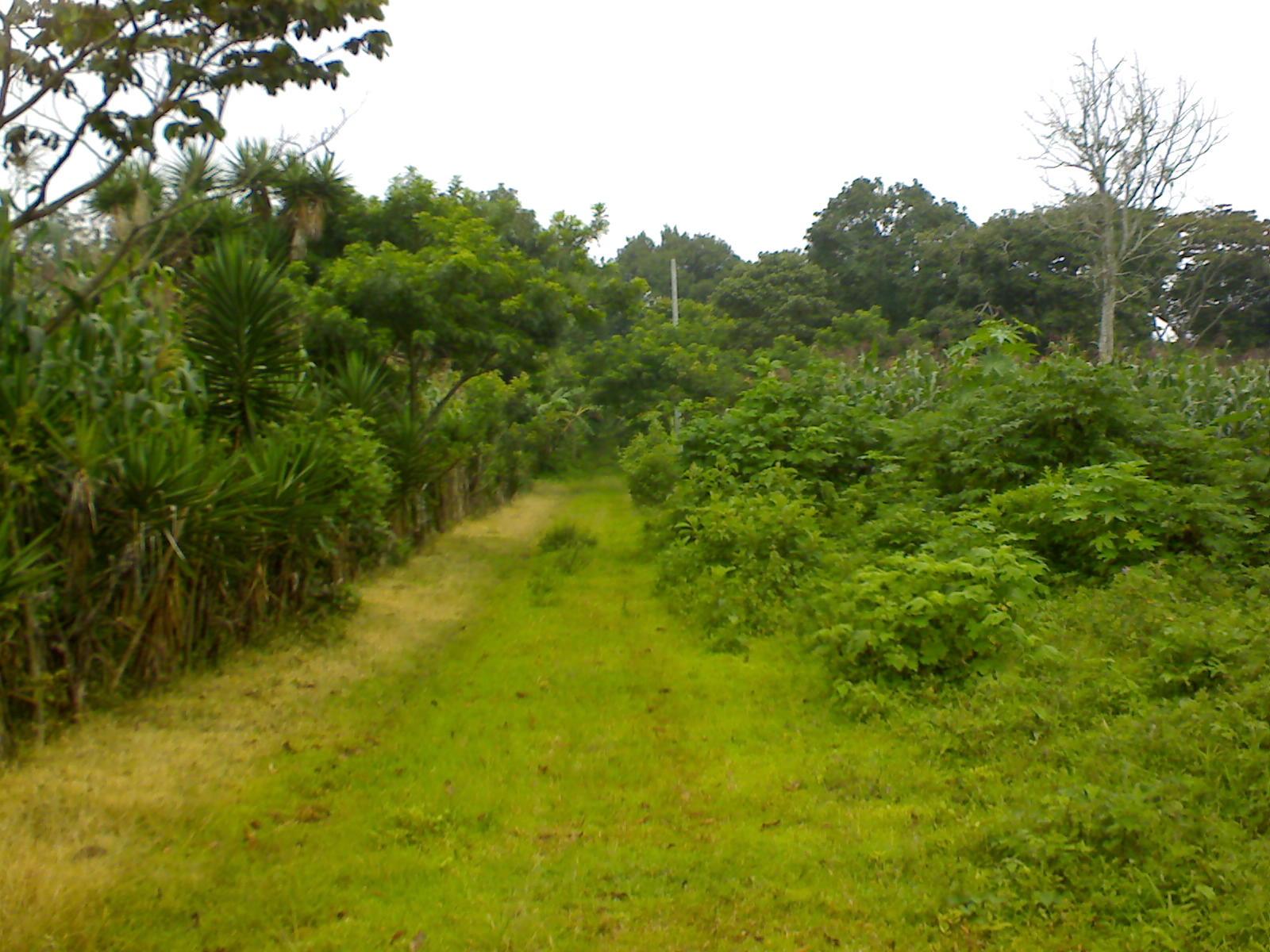Guatemala bienes raices terrenos carretera el salvador for Buscador de inmuebles